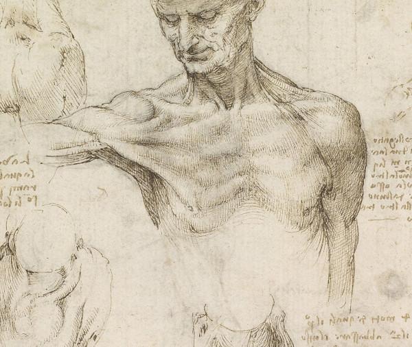 Leonardo Da Vinci anatomy drawing